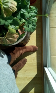 imagen de botas altas marrones