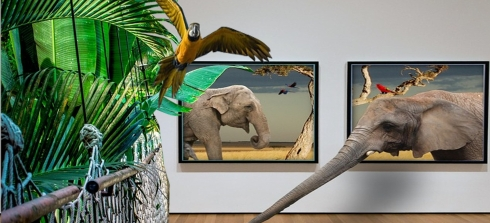 safari tropic collage