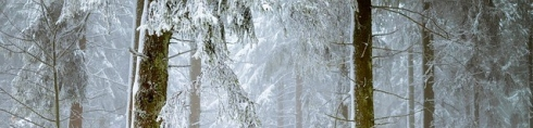imagen del invierno