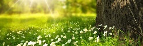imagen de la primavera